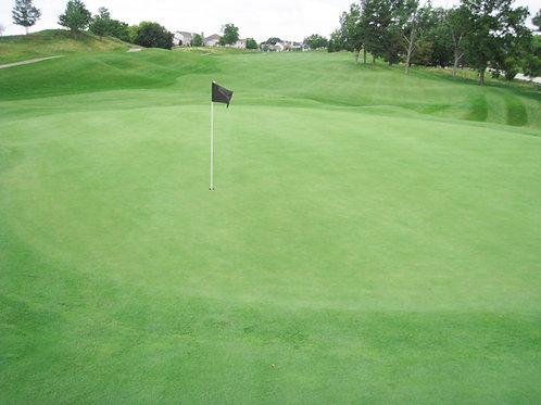Perennial Golf Greens Grass Seed