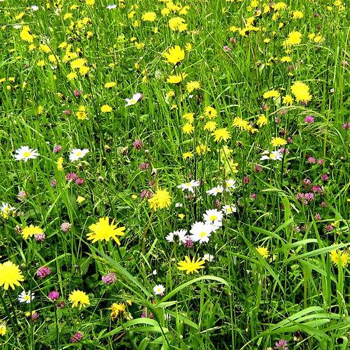 P8 Flowering Lawn