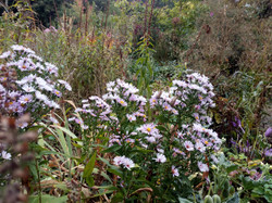 сад непрырывного цветения