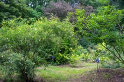 Arboretum Photos 072