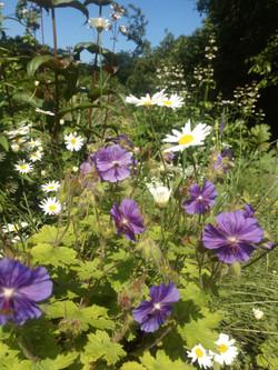 сад непрерывного цветения