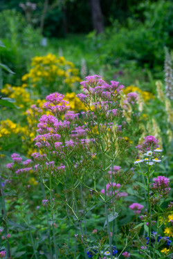 Arboretum Photos 066