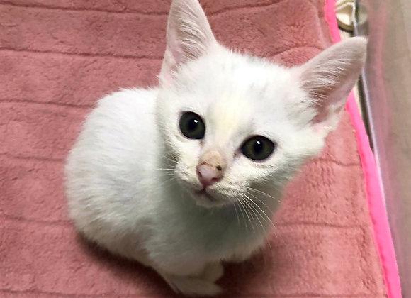 白猫「ふく」