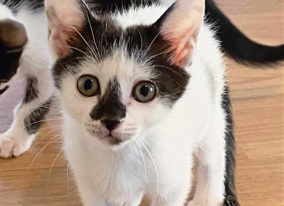 ぶち猫「ソニア」