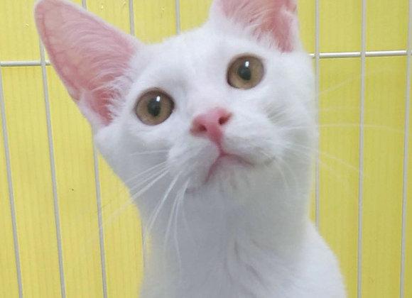 白猫「えか」
