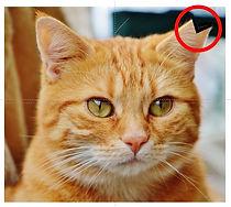 さくら猫2.jpg