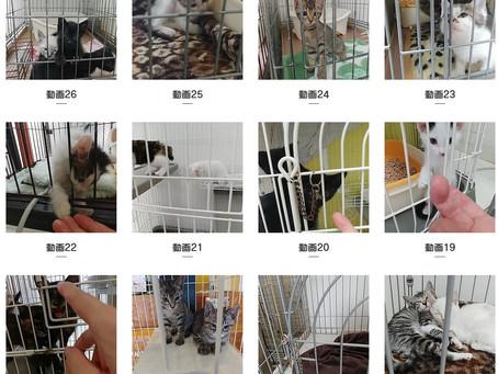 猫の健康管理(1)