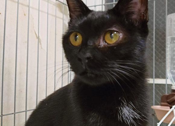 黒猫「さいひ」