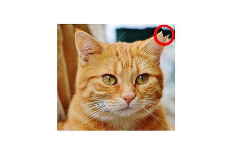 さくら猫5.jpg