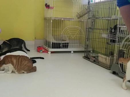 成猫ルームがオープン!