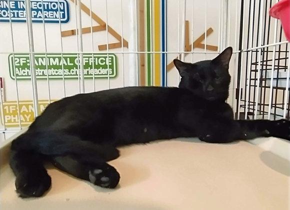 黒猫「きよ」