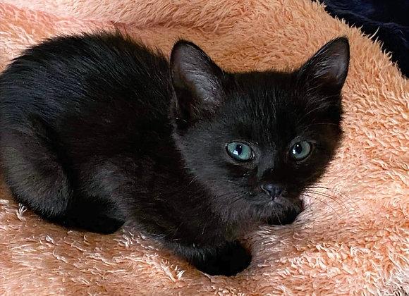 黒猫Chaton-B