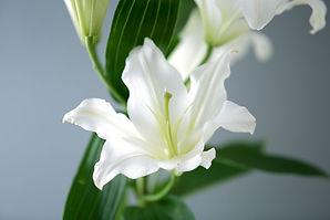 百合の花.jpg