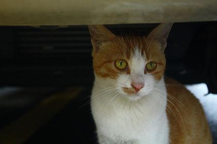 cat-4338682_1920.jpg