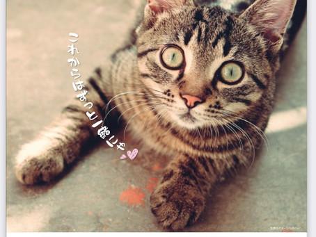 10月18日猫の譲渡会参加します