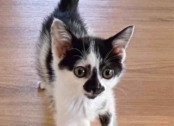 ぶち猫「せとか」
