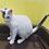 Thumbnail: ぶち猫「うた」