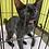 Thumbnail: 黒猫「こも」