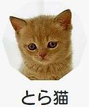 とら猫.jpg