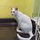 Thumbnail: 白猫「えか」