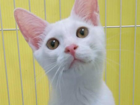 生後6ケ月の猫3匹トライアル決定!