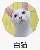 白猫.png