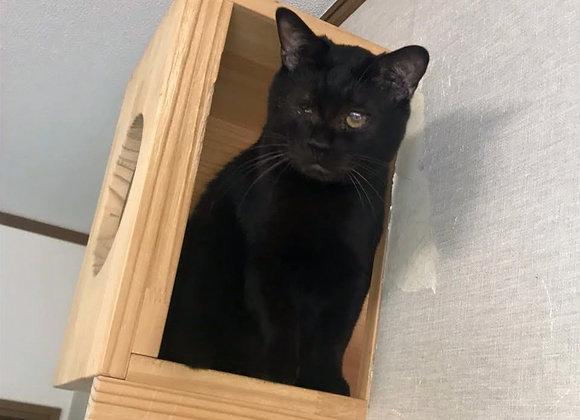 黒猫「ふーま」