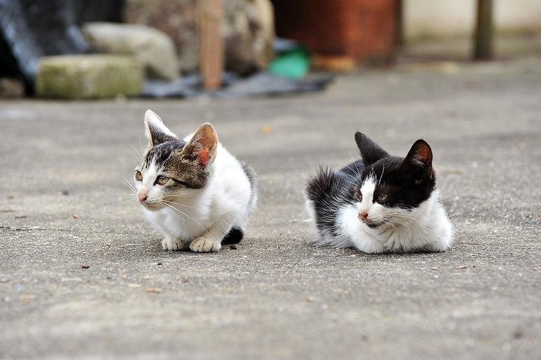 のら猫_4.jpg