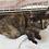Thumbnail: さび猫「すはら」