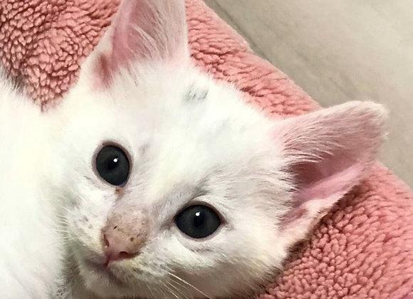 白猫「だい」