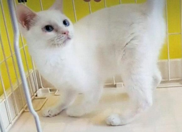 白猫縁(えん)