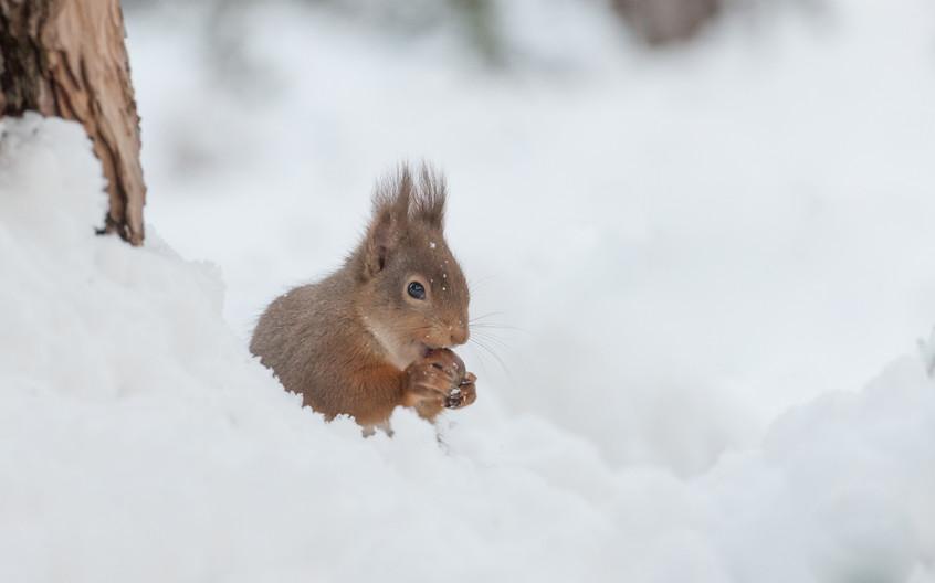 Frozen nuts!