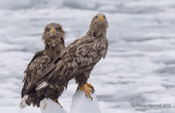 Pair of adults on the ice