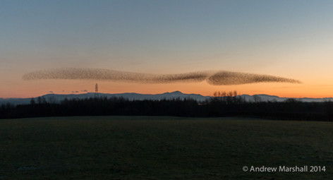 Drawn out starlings over the Lake District fells