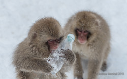 Fighting over a cold drink