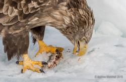 Feeding close !!