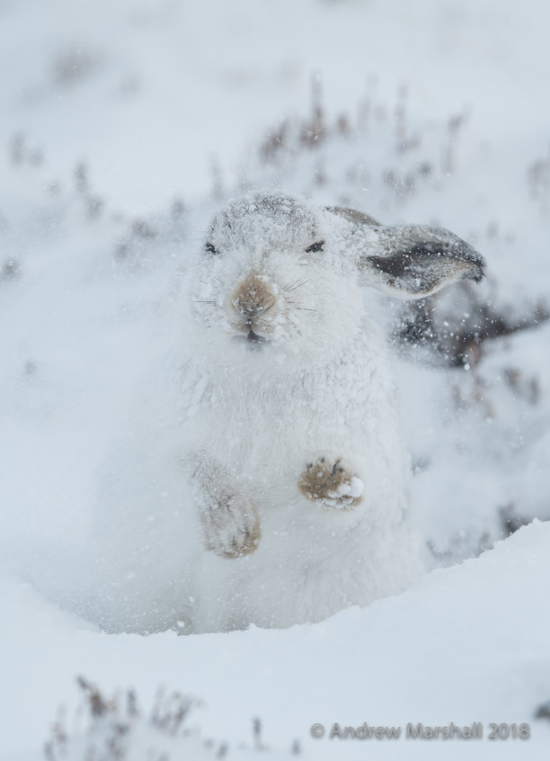 Snow in the ears!