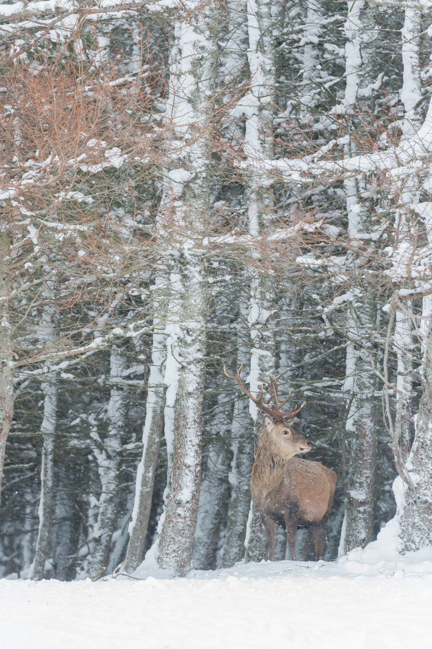 Portrait in the snow forest