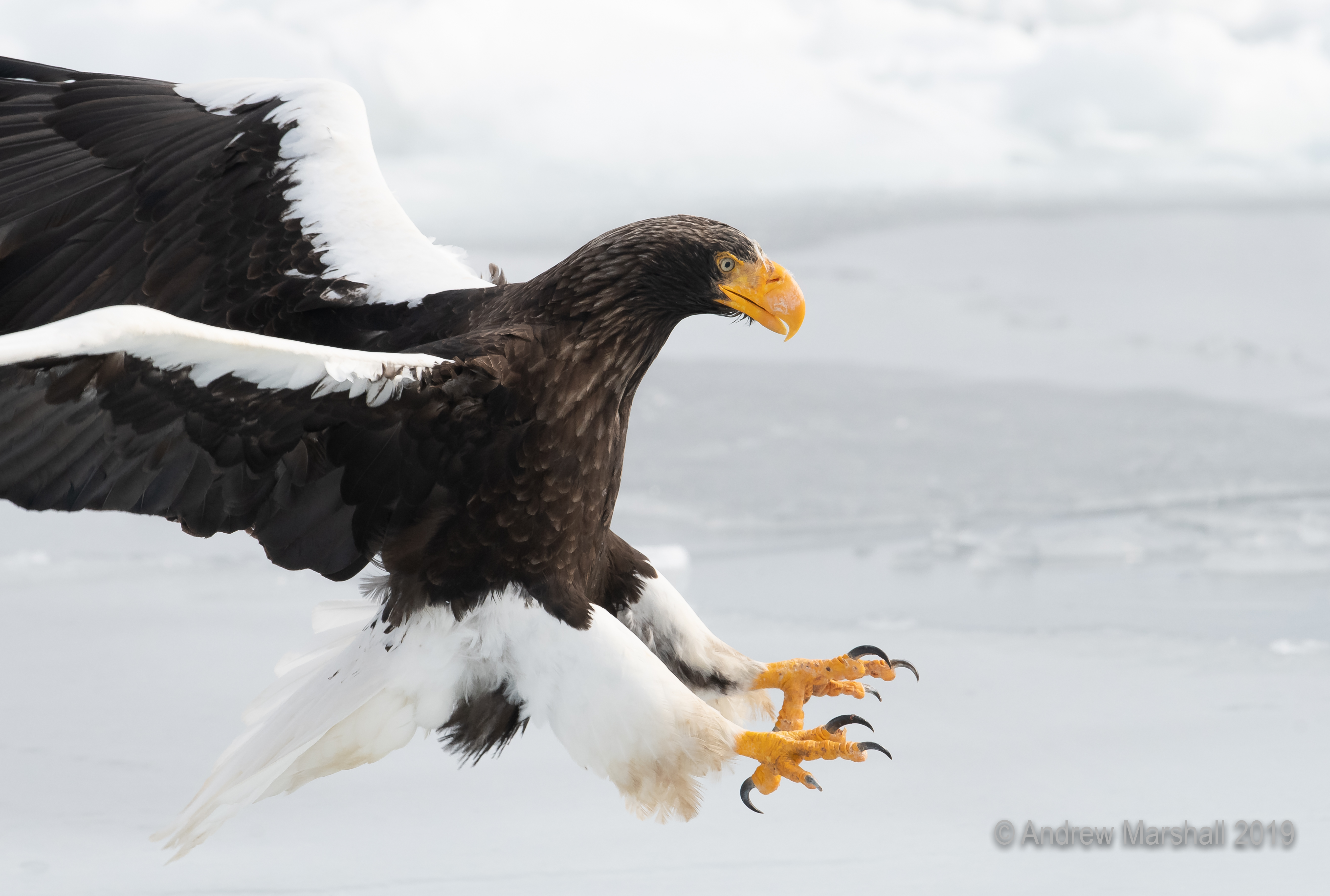 Talons out!