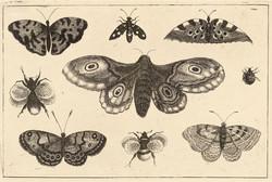 Wenceslas Hollar : A moth, butterflies a