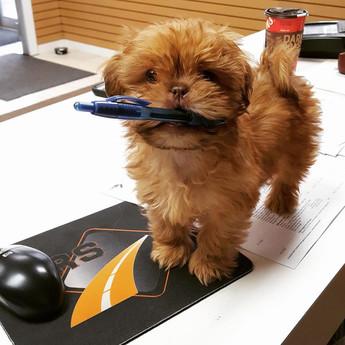 Dixon - CRS Dog.jpg