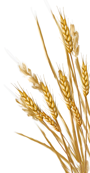 wheat_PNG48.png