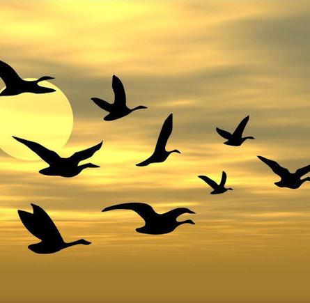 Somente Jesus tráz a paz!