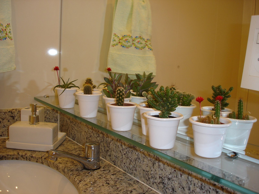 Cactos-no-banheiro