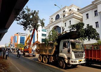 Transporting tree.jpg