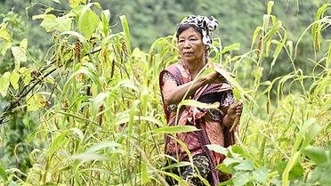 Edikhweu Akami in her fields.JPG