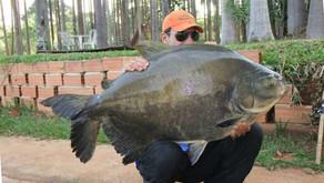 Clube de Pesca Recanto da Matrinxã – Conseguimos encontrar mais uma morada dos grandes Redondos em G