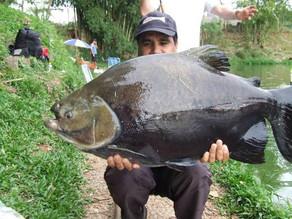 Pesqueiro Monte Negro – Início de temporada com grandes peixes capturados.