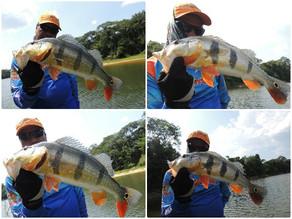 Fishingtur Selvagem -  Aventura e Adrenalina em busca do Tucunaré na exuberante Selva Amazônica.