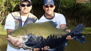 Pesqueiro Lago Verde – Nossa equipe vai a Goiás pescar a famosa Tambatinga